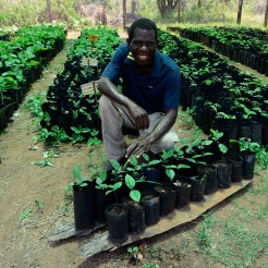 2. Paulo Cachingamu in Nhamacoa indigenous tree nursery