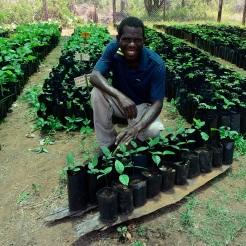 2. Paulo Cachingamu in Nhamacoa indigenous tree nursery