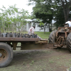 5.Transporting chanfutas for planting out on bare land