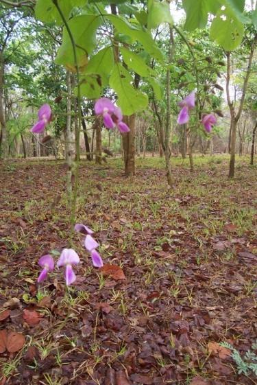 Panga Panga Flowers